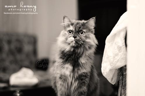 Cute Tmatem